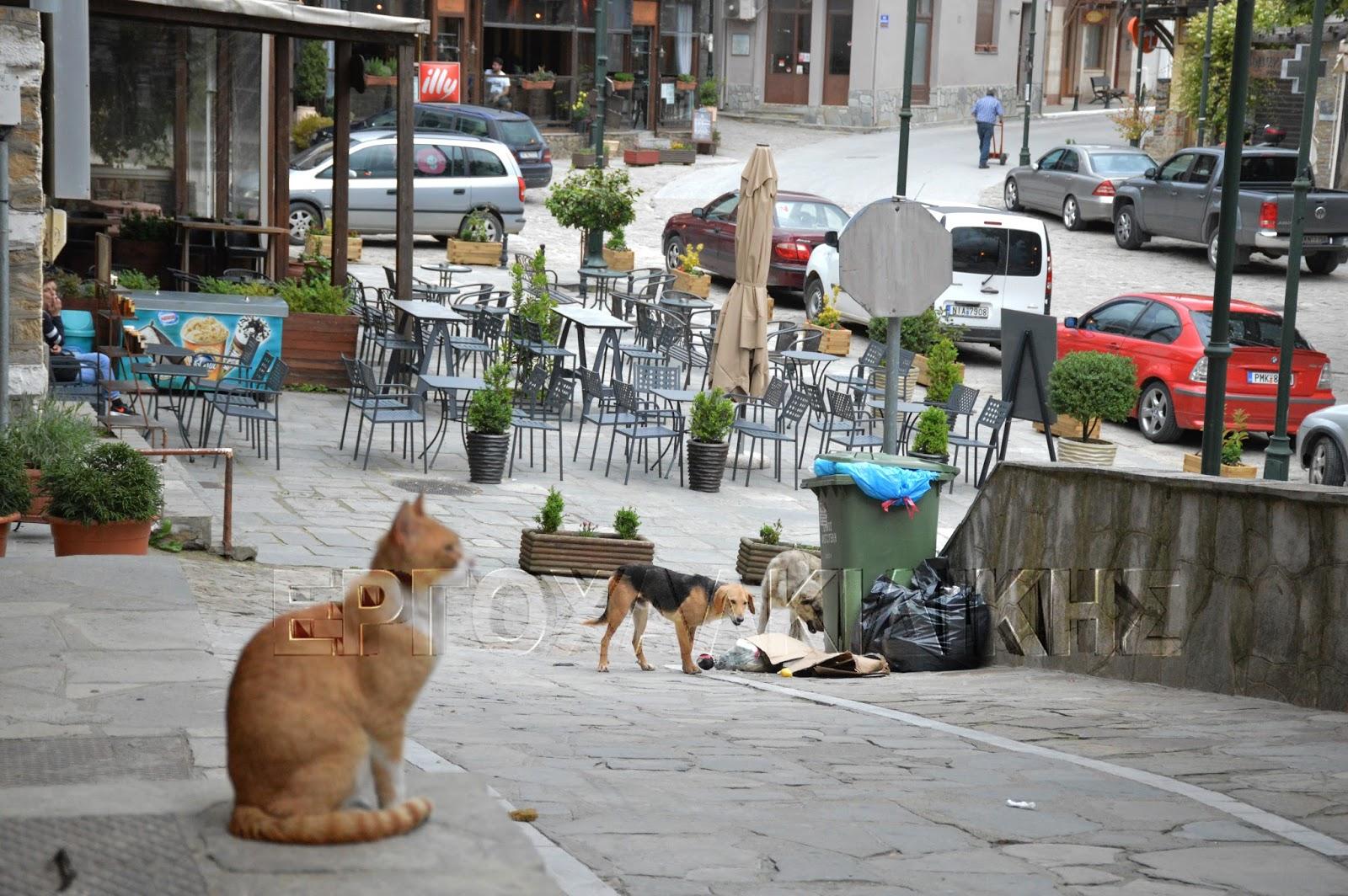 Μεγάλο το πρόβλημα με τα αδέσποτα ζώα στο Δήμο Αριστοτέλη (φώτο)