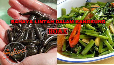 Hoax kangkung