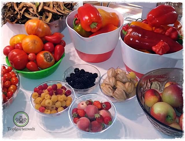 Rückblick Gemüsesaison 2018 viel Hitze und wenig Regen - Gartenblog Topfgartenwelt