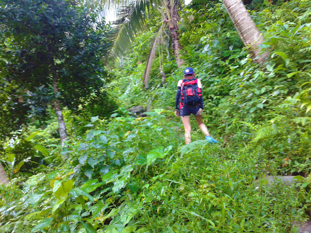 Vegetation Everywhere in 7 Falls Busay Falls