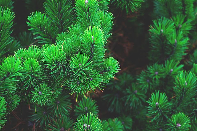 نبات,نباتات,نباتات مفترسة,خناق الذباب,حامول الماء,الحشرات,اليرقات,الإحتباس الحراري,التلوث,البيئة