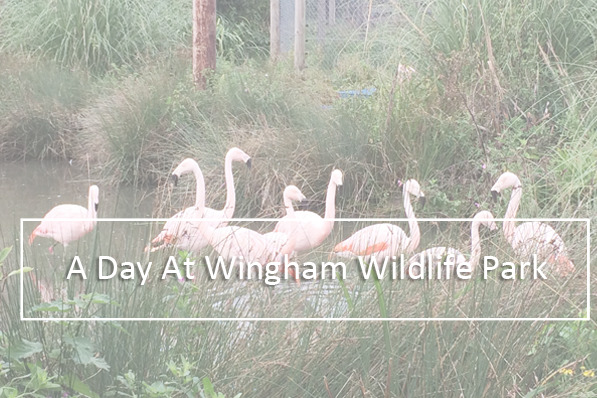 A Day At Wingham Wildlife Park