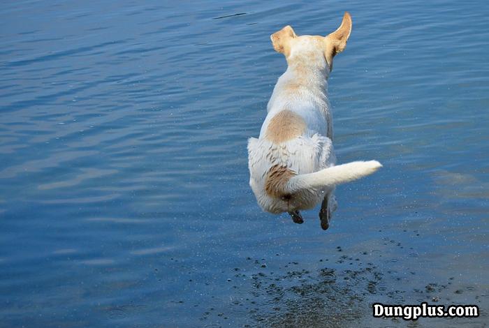 khoảnh khắc Một chú chó đang bay