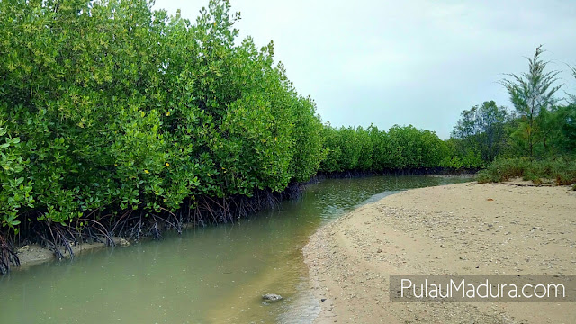 Wisata Hutan Mangrove di Desa Labuhan Kecamatan Sepulu
