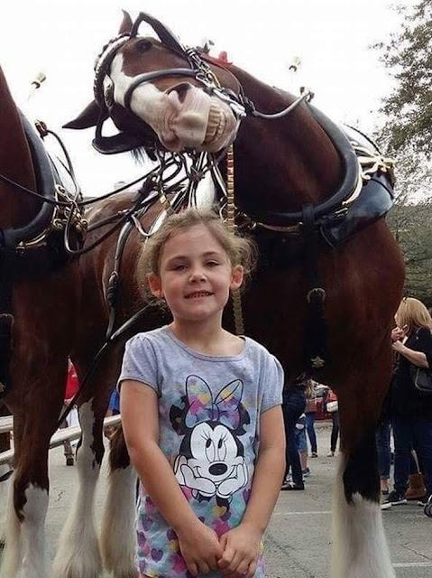 O cavalo mais fotogênico de todos os tempos!