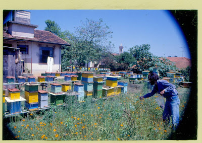 Antigo apiário de Mitsiotis localizado a 100 m da Igreja Matriz do Jaraguá.