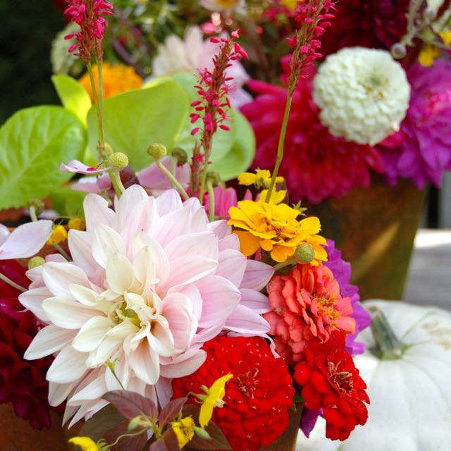 summer bouquet Zinnia and Dahlia