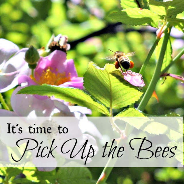 It's time to pick up the bees!
