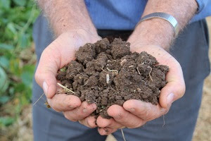 A handful of rich Lockyer Valley loam.
