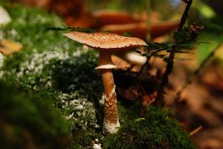 Ein kleiner, brauner Pilz mit Hut steht auf einem toten Baumstamm