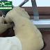 Gợi ý 5 máy khoan pin Bosch hỗ trợ việc lắp đặt tay đẩy thủy lực đơn giản