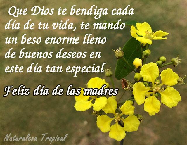 Que dios te bendiga cada día de tu vida, te mando un beso enorme lleno de buenos deseos en este día tan especial.