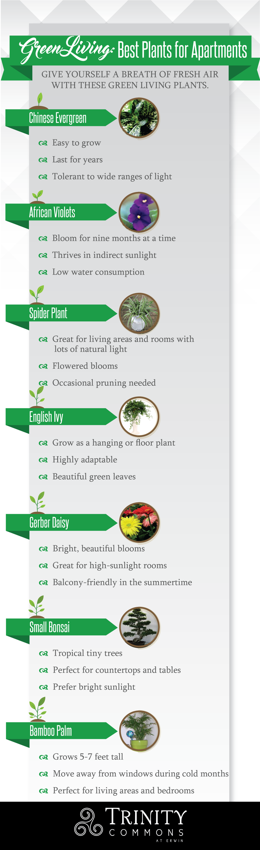 Best Plants for Apartments #infographic