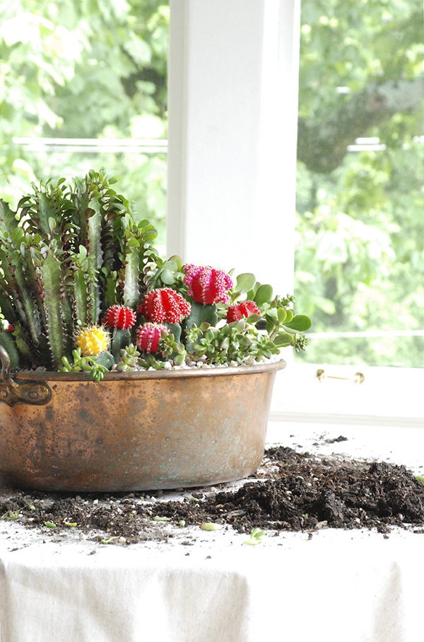 Cacti And Succulent Indoor Container Garden