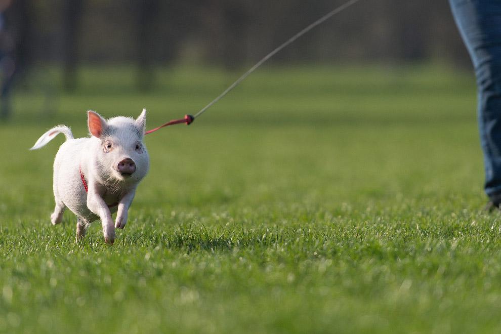Животные в фотографиях (14 фото)