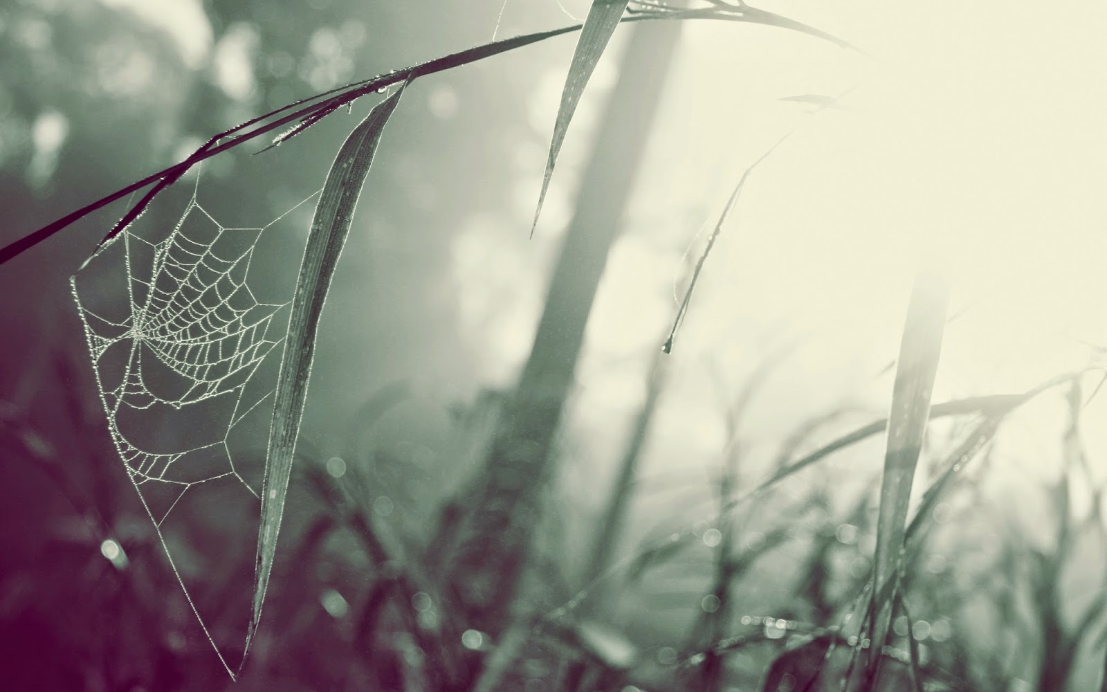 Wallpapers HD 1080p Free Download For Mobile, Windows 7, Windows 8 , 1366x768 ~ Get All Kind of ...