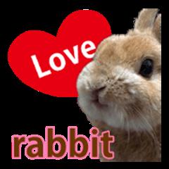 rabbit(papi) sticker