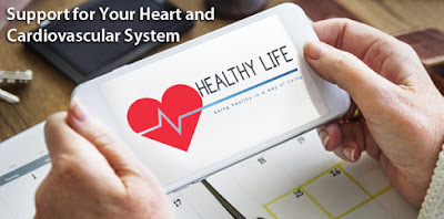 Support for Your Heart and Cardiovascular System