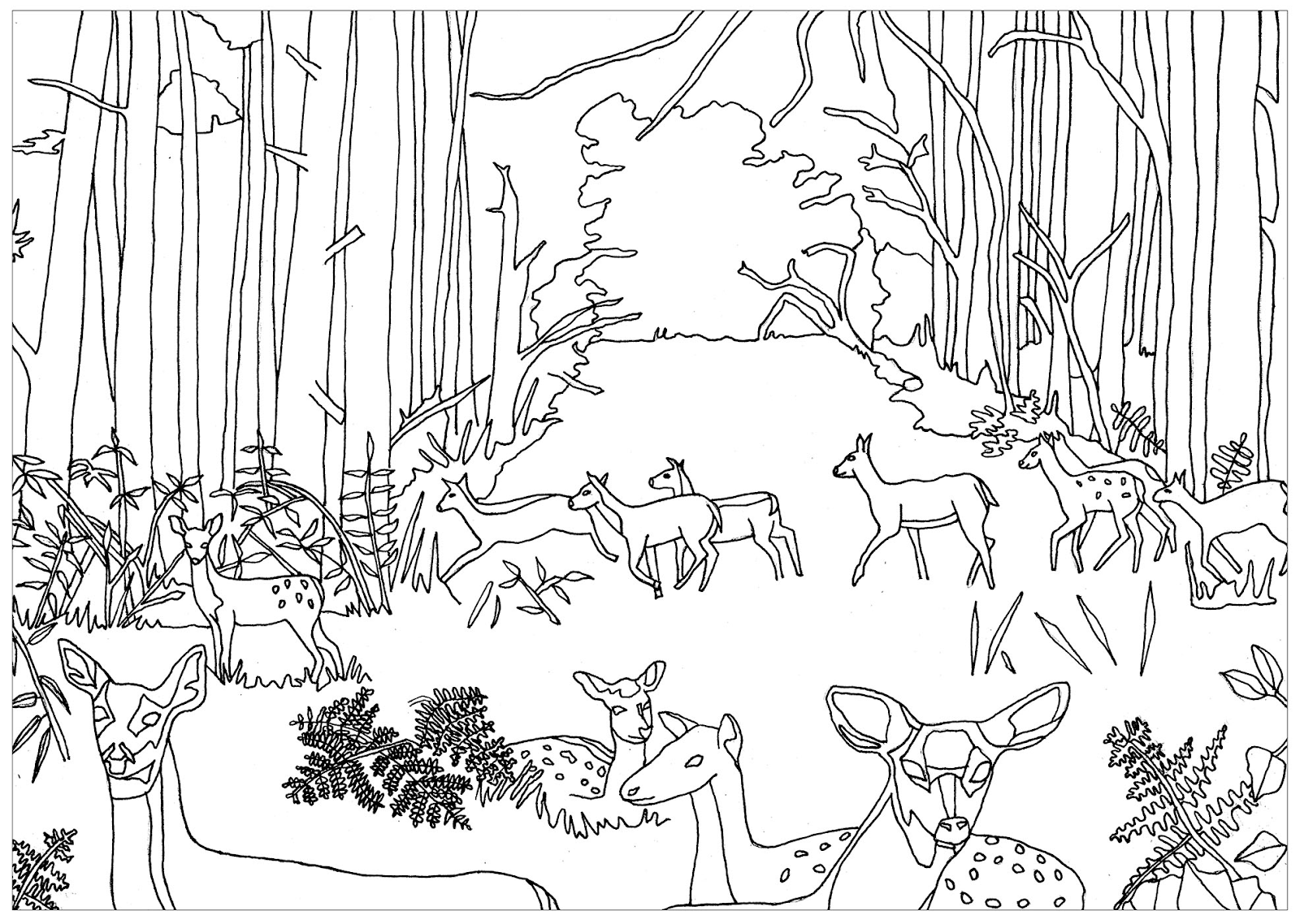 Sketsa Gambar Mewarnai Pemandangan Hutan Hitam Putih Terbaru