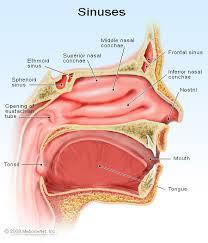 Obat Peradangan Sinus