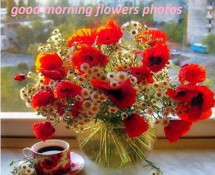 Beautiful Good Morning Images Free Shares Beautiful Good Morning