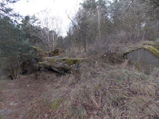 leśna wędrówka