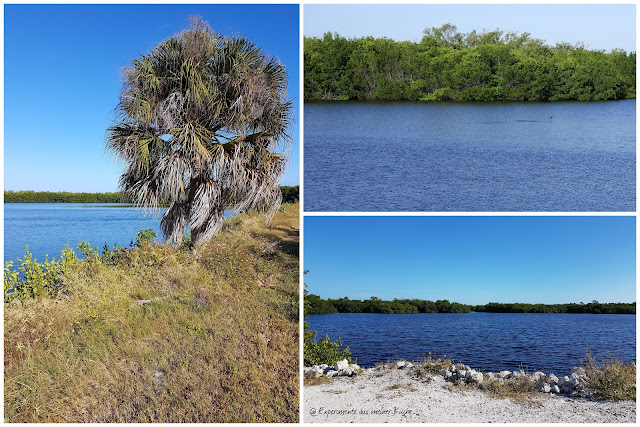 Florida - Fort Myers Beach - J.N. Ding Darling National Wildlife Refuge {EamK on Tour}