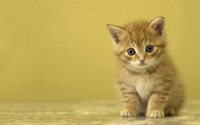 animal-bestwalls-collection-of-cat-images
