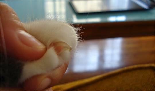 كيفيه قص اظافر القطه بالصور والفديو