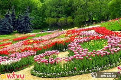 Vườn Bách thảo Moscow đẹp mộng mơ với trăm hoa đua nở.