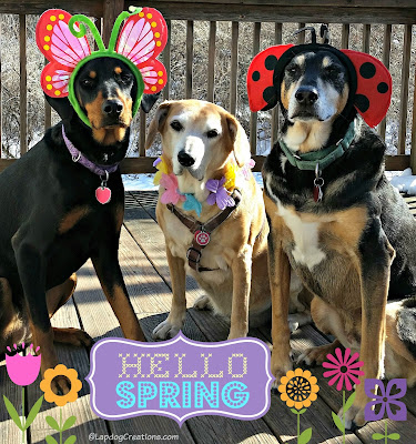 3 rescued dogs dressed up for spring