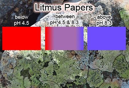 Roccella tinctoria Litmus