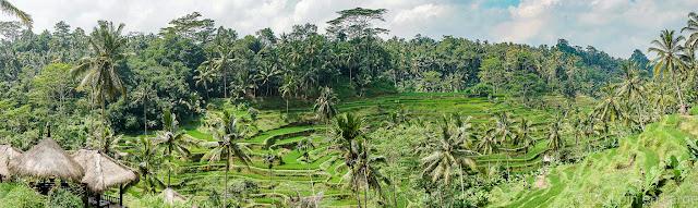 Rizières Tegallalang - Ceking - Ubud - Bali