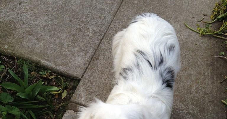 Lazy Aussie Dog Food Review