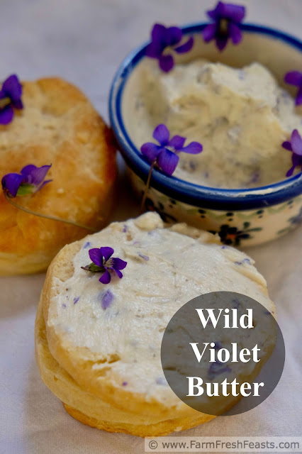 title image of a dish of wild violet butter and wild violet butter slathered on a biscuit