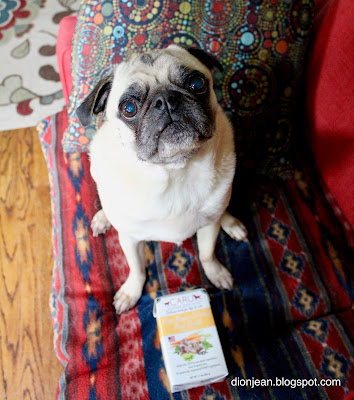 Liam the pug with chicken broth