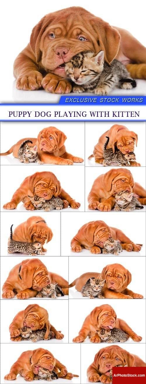 تحميل 12 صورة لكلب جرو يلعب مع هريرة بجودة عالية