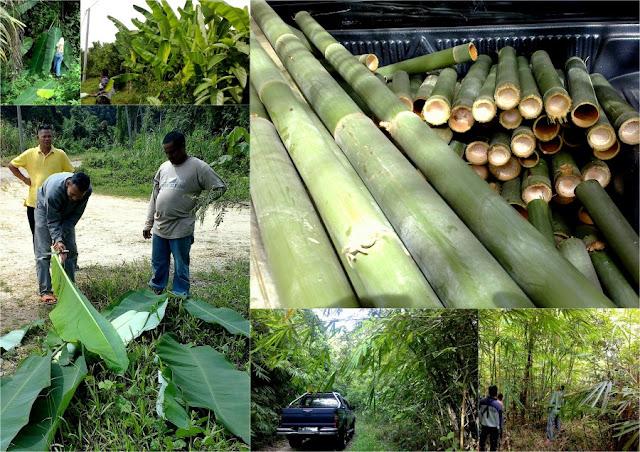 Mencari buluh lemang - Majlis Rumah Terbuka Aidilfitri Surau Muhajirin