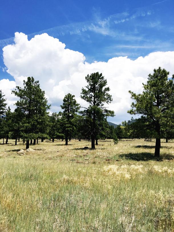 Daytrip to Flagstaff (laurelandfern.com)