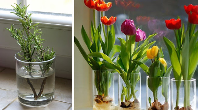 Flowers and Vegetables You Can Grow With Only a Glass