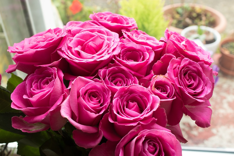 Pink Roses Images Pics Wallpaper Photos Bouquet In Hd Free Download