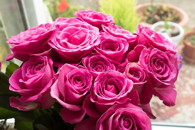 pink-rose-wallpaper-hd