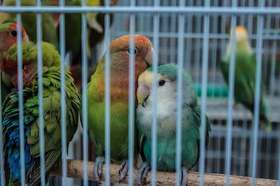 love birds care
