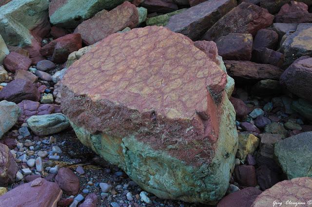 Surprenante roche d'arigilite avec polygones de dessiccation, Bréhec, (22) Bretagne