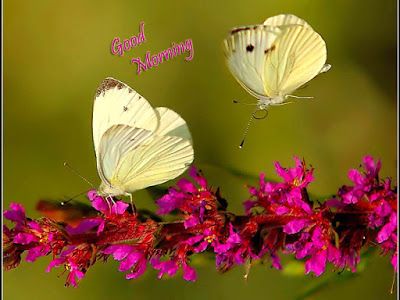 good morning images with butterfly