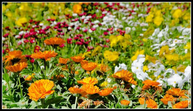 Flores Parque El Capricho Madrid