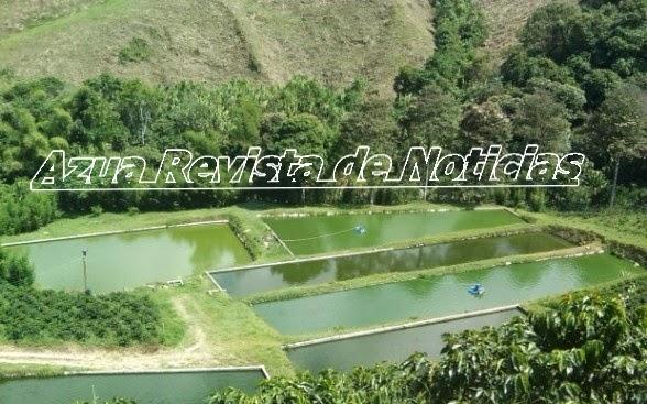 Buscan relanzar producci n de peces criados en estanques for Produccion de peces en estanques