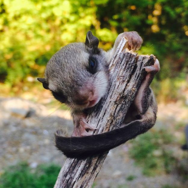 Baby Animals: Baby squirrel