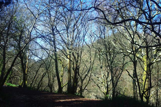 Imagen del bosque por el que discurre la senda