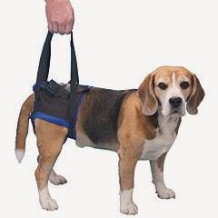 suporte para cães com lesão